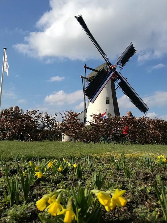 Netherlands Limburg 荷兰林堡省 大自然 草地 风车 花场